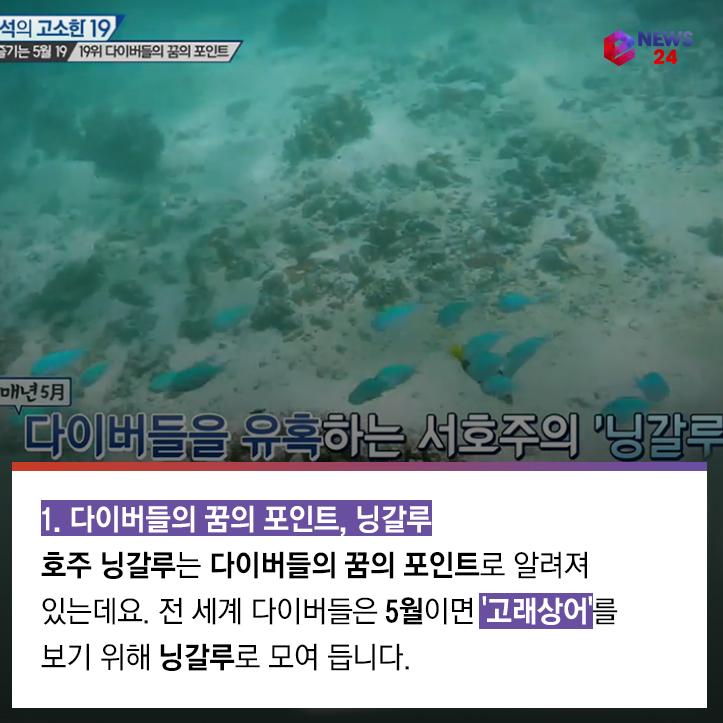 [카드뉴스] '강용석의 고소한 19', 5월에 대처하는 '여행의 자세'